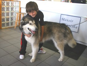 Husky-with-boy-Reception-area-6-07-2012--300x230