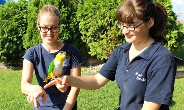 services-autres-animaux-other-pets-karolina-valerie-billy-oiseau