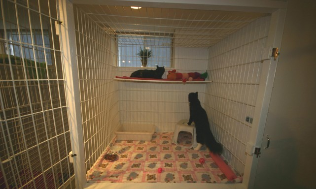 services-chats-cats-pension-3-boarding-cage-crate-e1332638469191