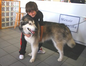 dog-boading-client-pension-husky-manoir-kanisha-12