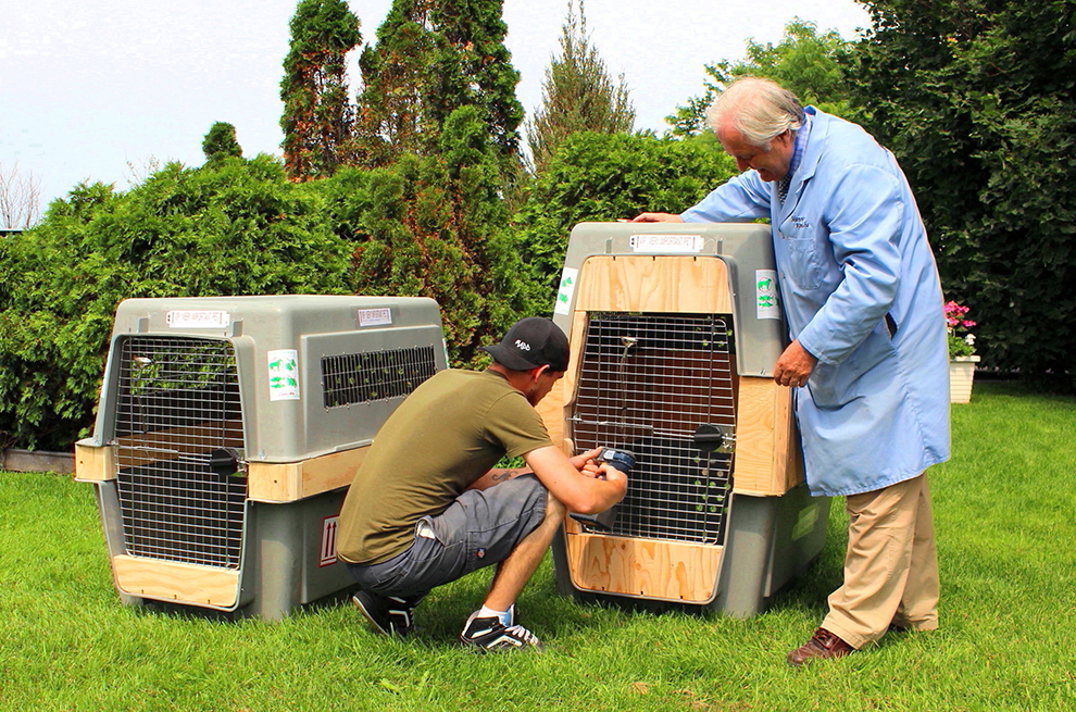 dog-crate-extension-transport-cage-chien-tim-michael-manoir-kanisha-800