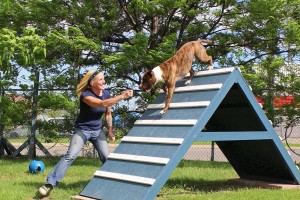 dog-playtime-jeu-chien-pitbull-debbie-manoir-kanisha-109