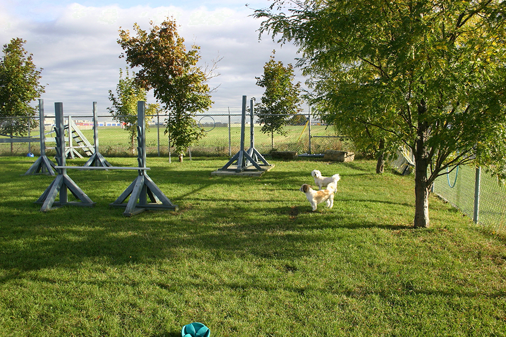 dog-playtime-lhasa-apso-jeu-lady-froufrou-manoir-kanisha-496