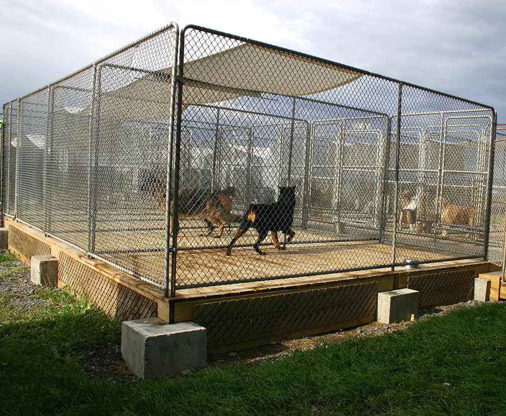 Backyard Enclosures For Dogs : Outdoor Dog Enclosures  galleryhipcom  The Hippest Galleries!
