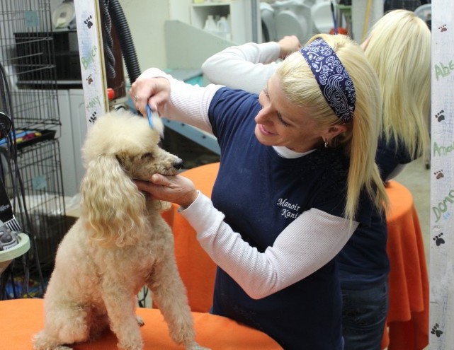grooming-dog-poodle-toilettage-chien-caniche-debbie-manoir-kanisha-42-e1424118929537