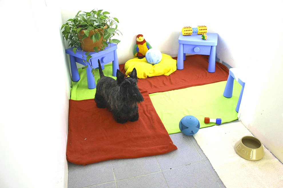 scottish-terrier-boarding-condo-pension-terrier-ecossais-manoir-kanisha-104