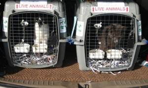 services-chats-cats-relocalisation-pet-relocation-e1340553098411