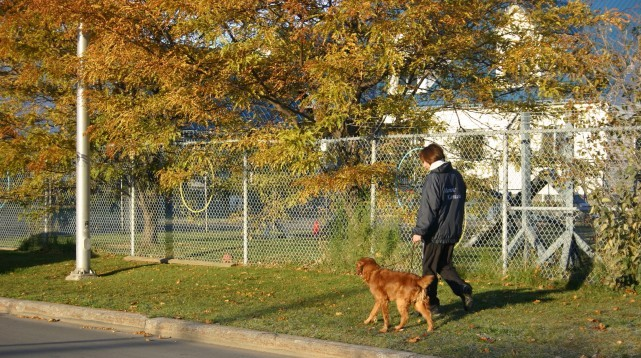 services-chiens-dogs-marches-automne-fall-walks-nadine-golden-e1425411736281