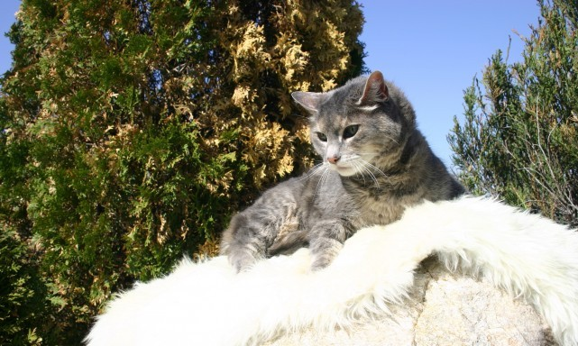 services-chats-cats-senior-mascara-e1339556606936