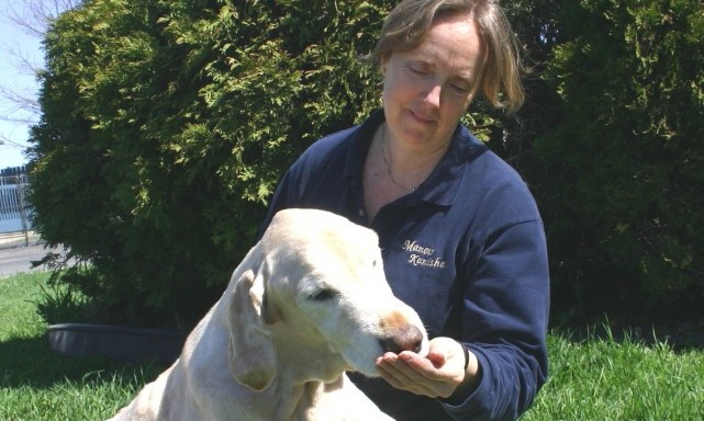 services-chiens-ages-senior-dogs-Janet-and-Baxter