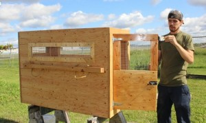 services-pet-relocation-crate-in-wood-tim-michael-staining-e1346248997536-300x179