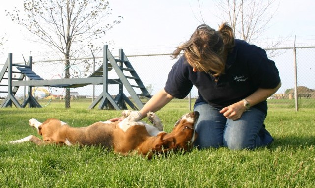 services-chiens-dogs-jeux-playtime-ziggy-janet