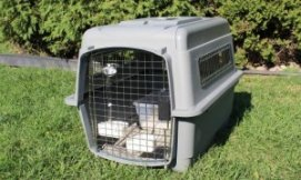services-chats-cats-travel-crate-size-200-34-e1347575878598-300x179