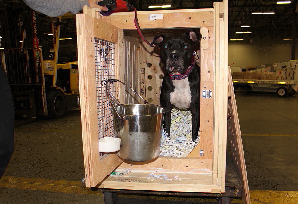 Cr 82 Or Cr82 Crate For Potentially Agressive Dog