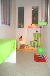 cat-boarding-condo-pension-chat-condo-manoir-kanisha-7411