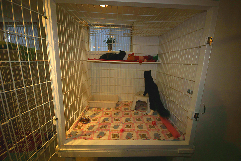 cat-boarding-crate-pension-chat-cage-manoir-kanisha-66