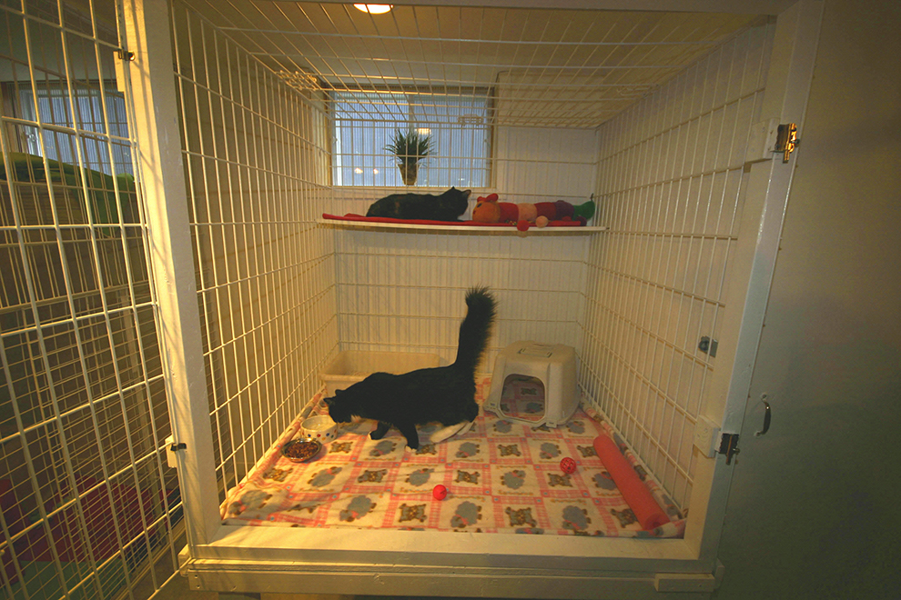 cat-boarding-crate-pension-chat-cage-manoir-kanisha-77