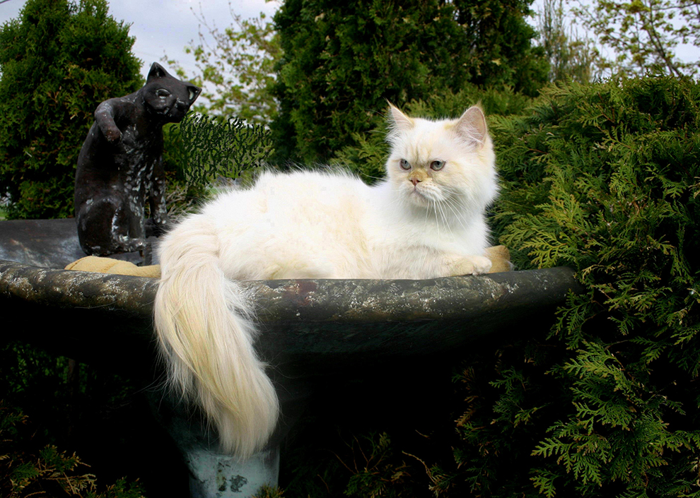 cat-photography-photographie-chat-balou-manoir-kanisha-898