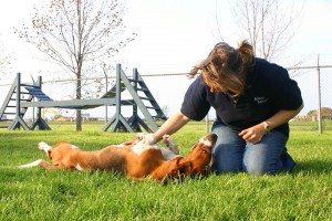 dog-playtime-basset-jeu-chien-janet-manoir-kanisha-807