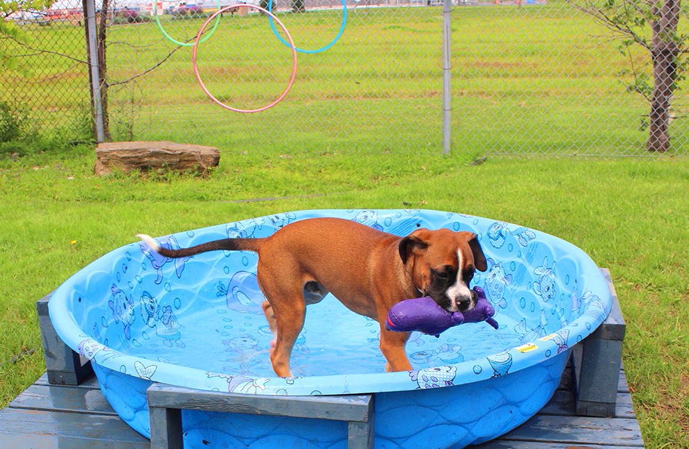 dog-playtime-pool-jeu-chien-piscine-samson-manoir-kanisha-556