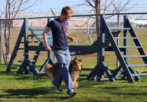 dog-running-collie-course-chien-eric-manoir-kanisha-707
