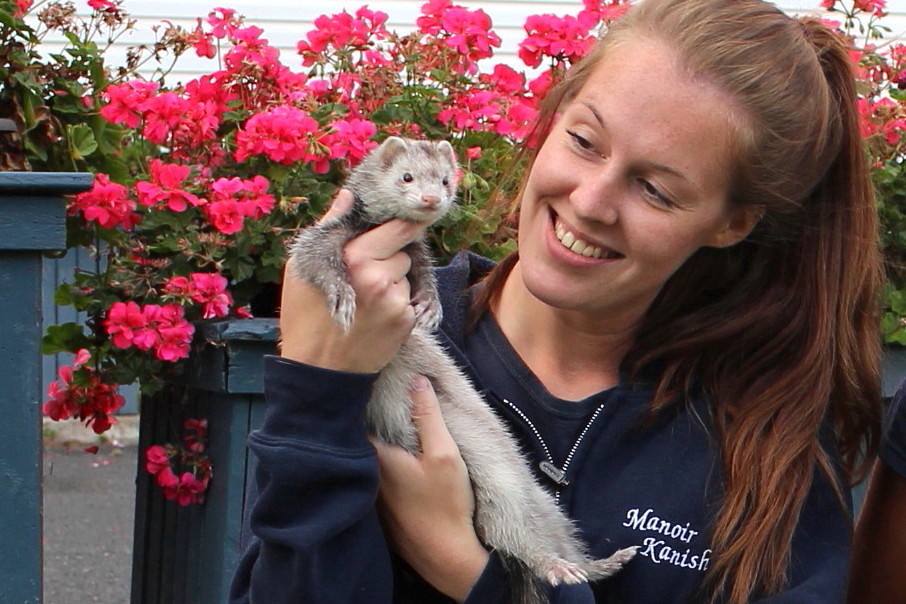 ferret-boarding-pension-furet-karolina-manoir-kanisha-803
