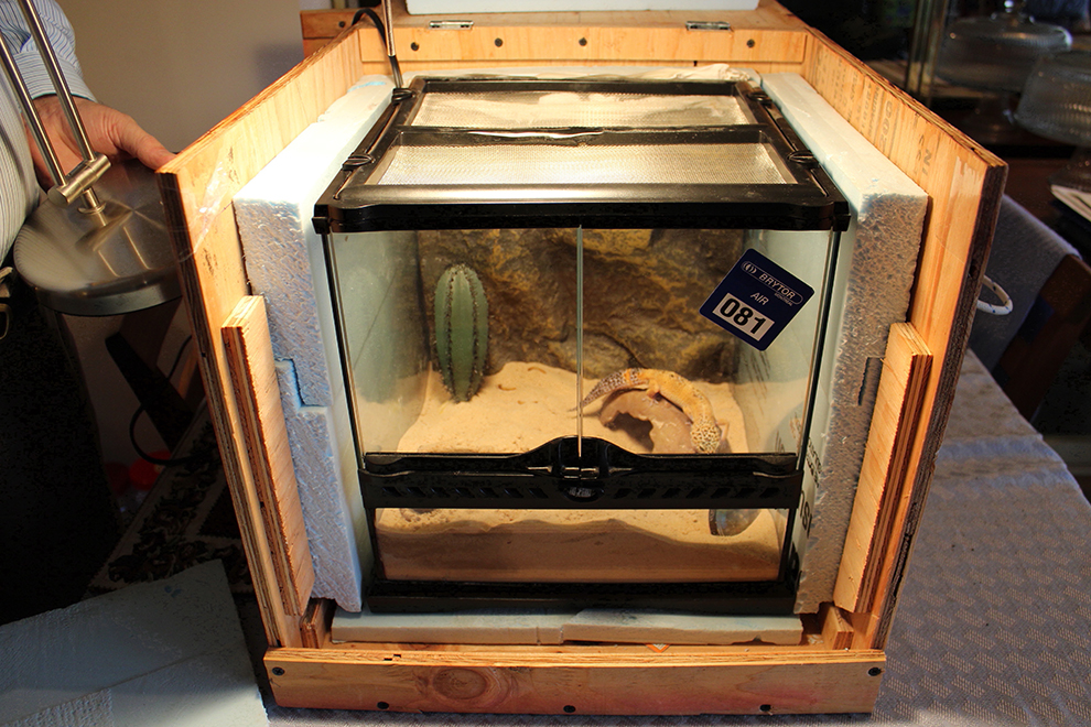 gecko-travel-crate-reptile-cage-transport-harry-manoir-kanisha-604