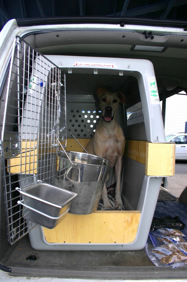 Car Crates For Large Dogs
