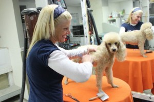 grooming-dog-poodle-toilettage-chien-caniche-debbie-manoir-kanisha-40.jpg