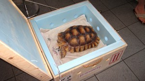 turtle-travel-crate-reptile-cage-transport-tortue-manoir-kanisha-602