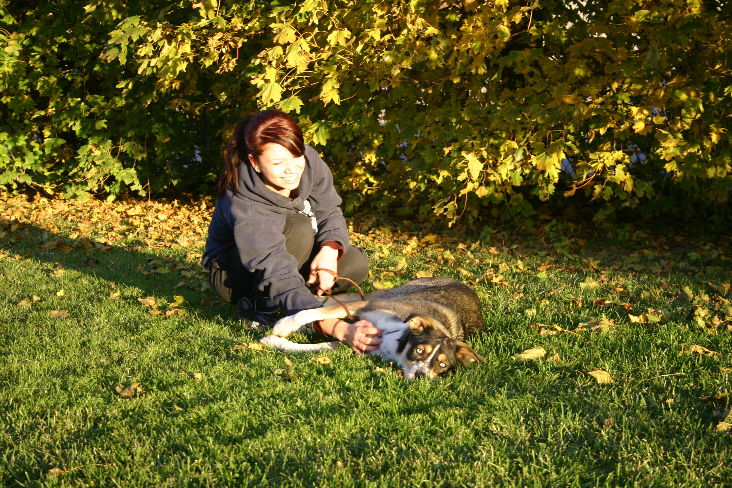 services-chiens-marches-FALL-Van-61