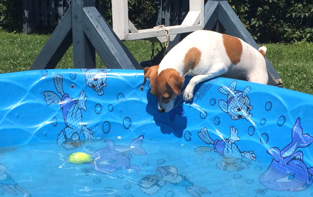 dog-boarding-pool-playtime-bonnie-manoir-kanisha-971