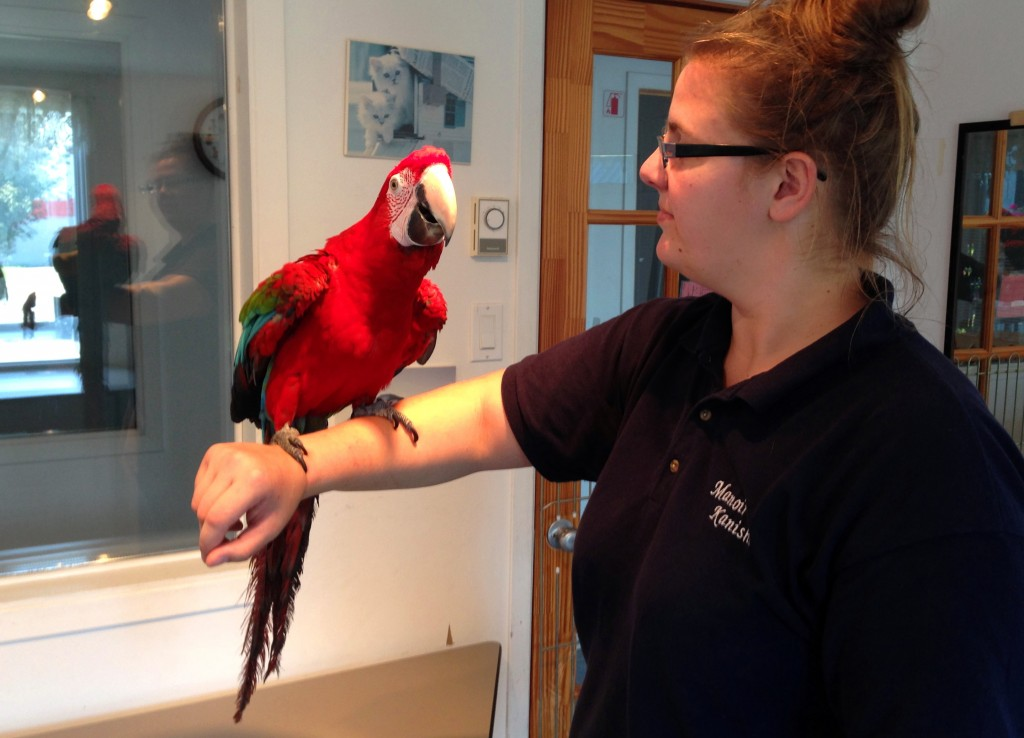 bird-boarding-stella-macaw-alyssa-manoir-kanisha-2566