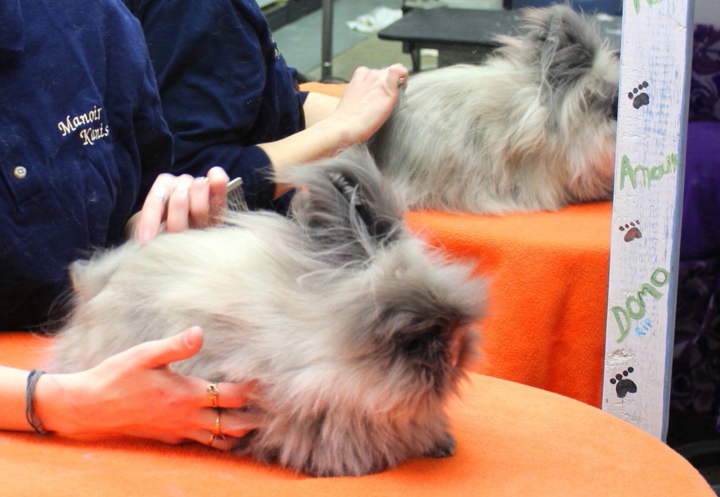 Grooming and shaving of Other pets - Manoir Kanisha