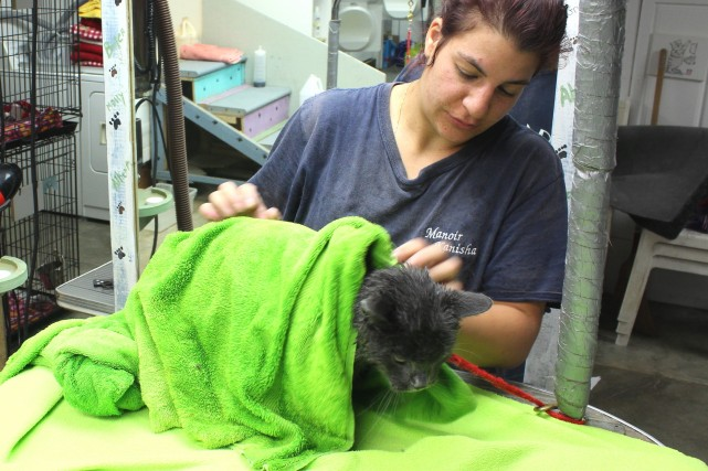cat-grooming-toilettage-chat-alexandra-smokey-manoir-kanisha-235-e1451604885621