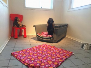 crate-training-STEP-1-zara-Manoir Kanisha-2081