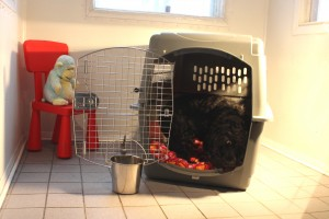 crate-training-step-3-zara-manoir-kanisha-7235