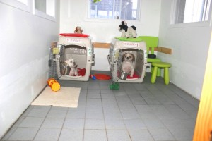 dog-travel-crate-training-entrainement-cage-transport-manoir-kanisha-1044
