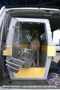 great-dane-crate-extension-transport-cage-danois-manoir-kanisha-808ipata