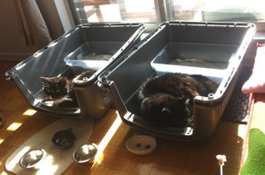 rsz_cat-relocaftion-travel-crate-training-leo-loulou-manoir-kanisha-