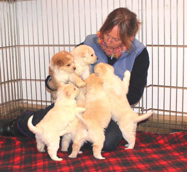 ifaw-dog-boarding-pension-chien-janet-manoir-kanisha-303A-e1476372599152