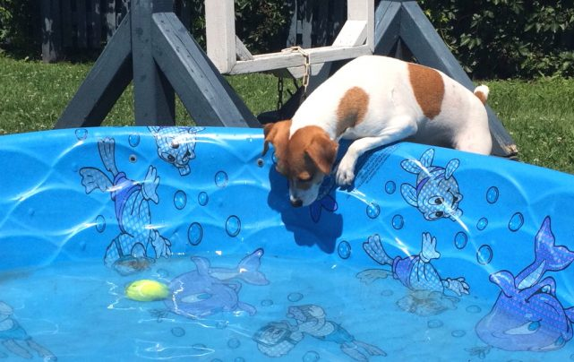 My Dog Is Afraid Of Water What Can I Do Many Activities Can Be Done To Improve This Situation