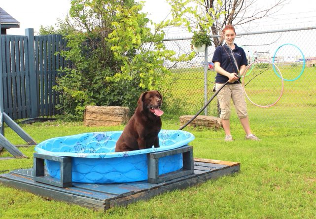 My dog is afraid of water! What can I do?