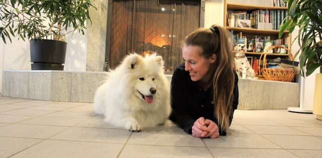 dog-boarding-freyja-samoyed-karolina-manoir-kanisha-897-e1503421456184