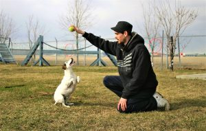 DOGS LOVE TO PLAY WITH A TENNIS BALL